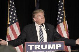 Donald Trump © 2016 Matt Johnson | flickr.com